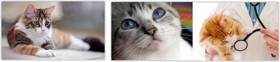 Esporotricose: pesquisadores esclarecem sobre a doença, que pode afetar animais e humanos