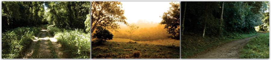Reserva Biológica do Tinguá